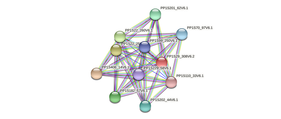PP1S29_308V6.2 protein (Physcomitrella patens) - STRING interaction network