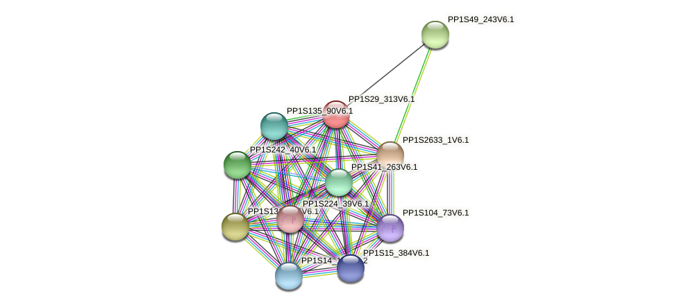 PP1S29_313V6.1 protein (Physcomitrella patens) - STRING interaction network