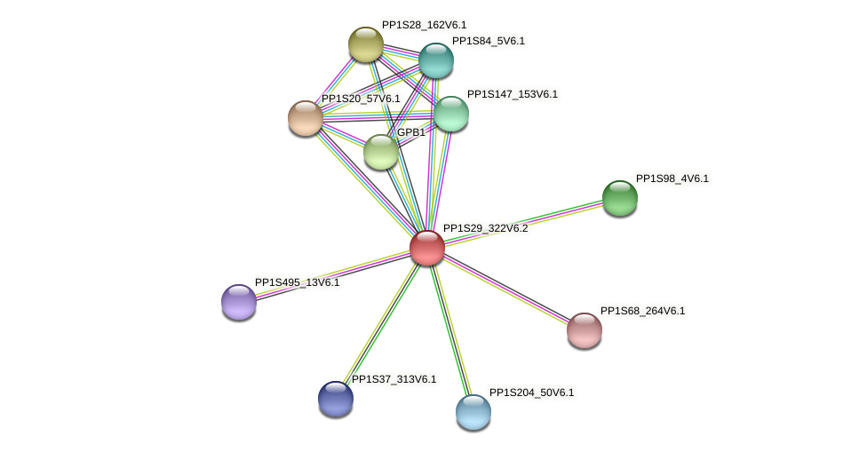 PP1S29_322V6.1 protein (Physcomitrella patens) - STRING interaction network