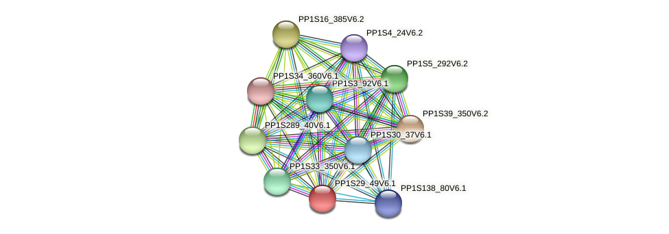 PP1S29_49V6.1 protein (Physcomitrella patens) - STRING interaction network