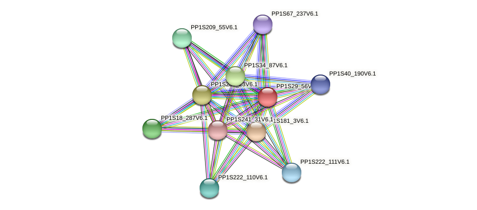 PP1S29_56V6.1 protein (Physcomitrella patens) - STRING interaction network