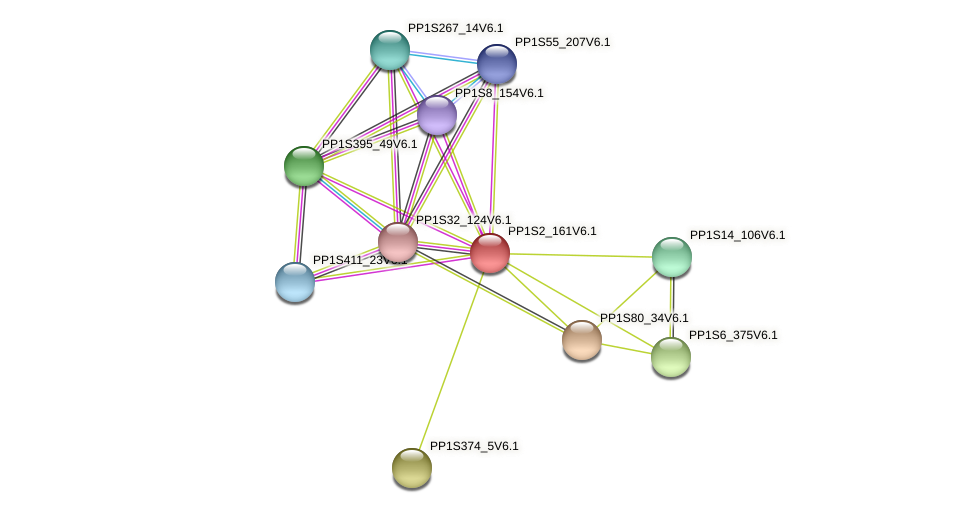 PP1S2_161V6.1 protein (Physcomitrella patens) - STRING interaction network