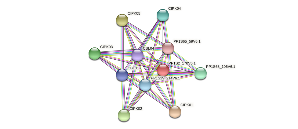 PP1S2_170V6.1 protein (Physcomitrella patens) - STRING interaction network