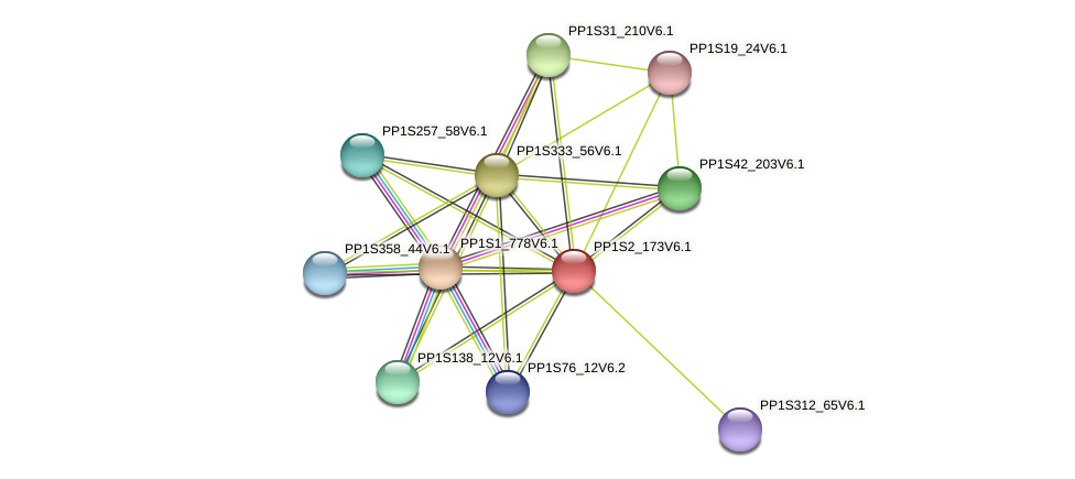 PP1S2_173V6.1 protein (Physcomitrella patens) - STRING interaction network