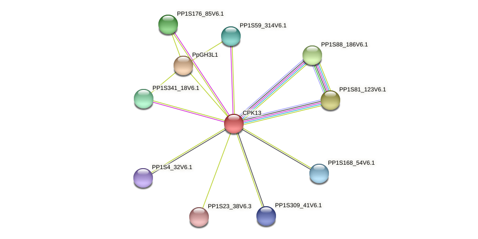 CPK13 protein (Physcomitrella patens) - STRING interaction network