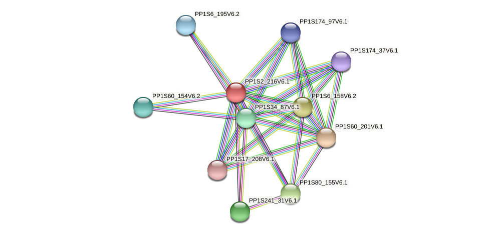 PP1S2_216V6.1 protein (Physcomitrella patens) - STRING interaction network