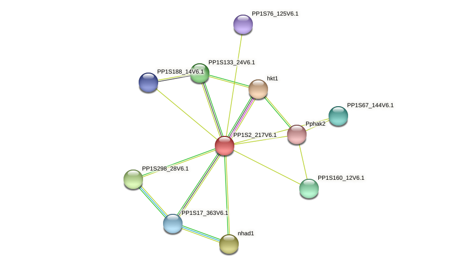 PP1S2_217V6.1 protein (Physcomitrella patens) - STRING interaction network