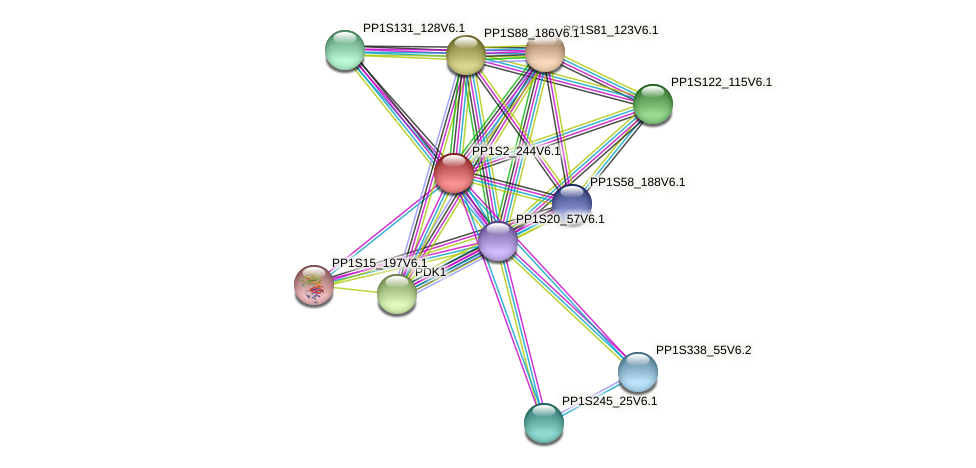 PP1S2_244V6.1 protein (Physcomitrella patens) - STRING interaction network