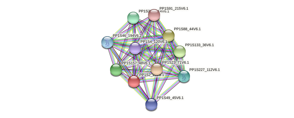 PP1S2_25V6.1 protein (Physcomitrella patens) - STRING interaction network