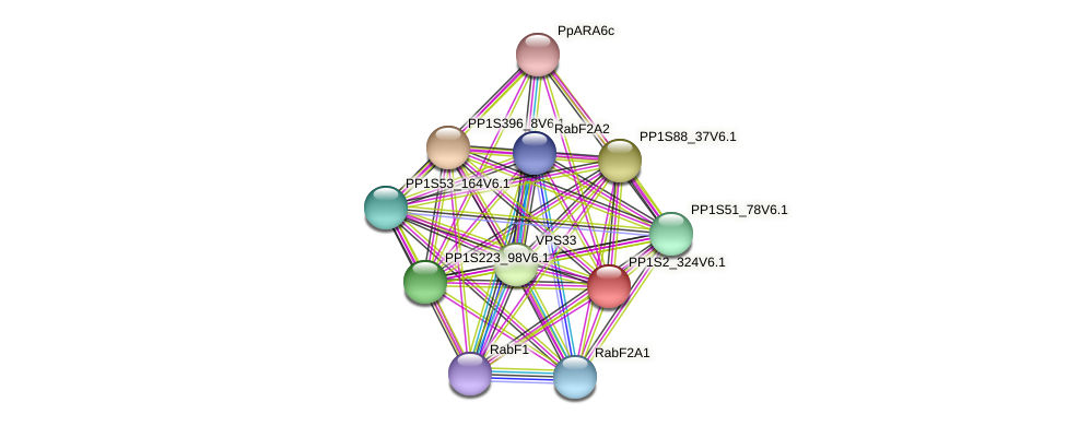 PP1S2_324V6.1 protein (Physcomitrella patens) - STRING interaction network