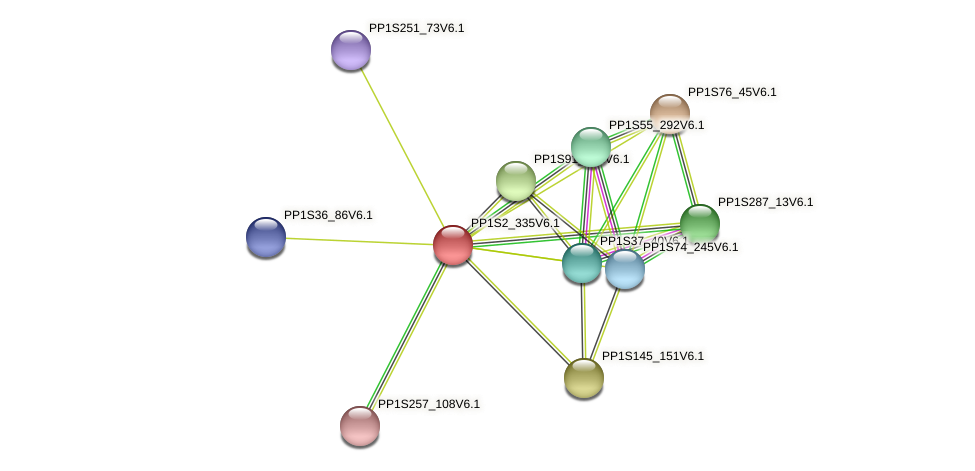 PP1S2_335V6.1 protein (Physcomitrella patens) - STRING interaction network