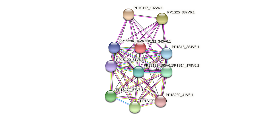 PP1S2_340V6.1 protein (Physcomitrella patens) - STRING interaction network