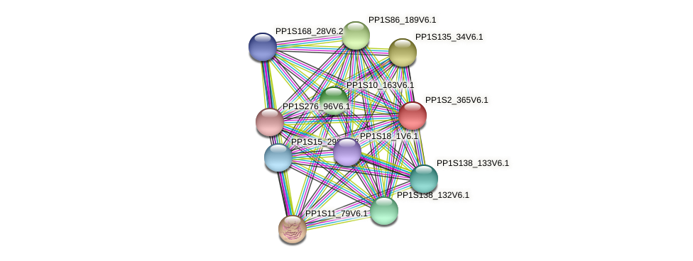 PP1S2_365V6.1 protein (Physcomitrella patens) - STRING interaction network