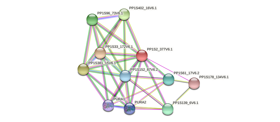 PP1S2_377V6.1 protein (Physcomitrella patens) - STRING interaction network