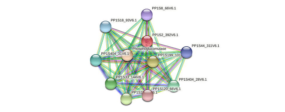 PP1S2_392V6.1 protein (Physcomitrella patens) - STRING interaction network