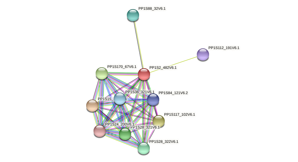 PP1S2_482V6.1 protein (Physcomitrella patens) - STRING interaction network