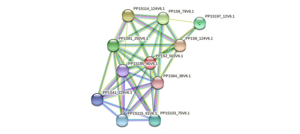 PP1S2_503V6.1 protein (Physcomitrella patens) - STRING interaction network