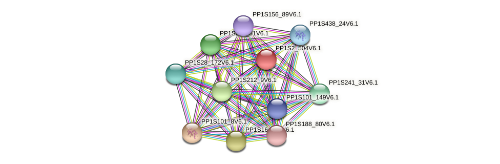 PP1S2_504V6.1 protein (Physcomitrella patens) - STRING interaction network