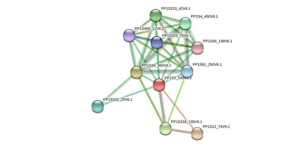 PP1S2_543V6.1 protein (Physcomitrella patens) - STRING interaction network