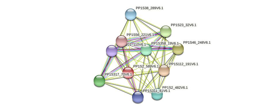PP1S2_589V6.1 protein (Physcomitrella patens) - STRING interaction network