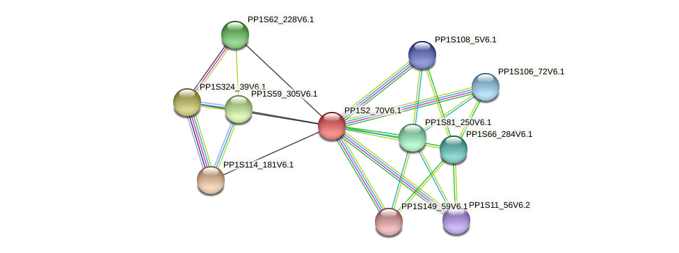 PP1S2_70V6.1 protein (Physcomitrella patens) - STRING interaction network