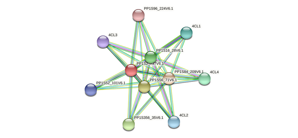 PP1S2_737V6.1 protein (Physcomitrella patens) - STRING interaction network