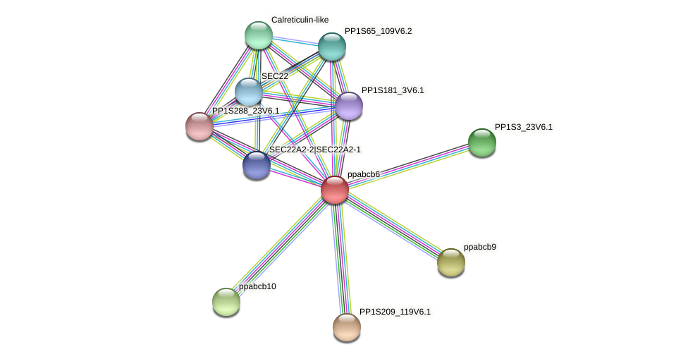 ppabcb6 protein (Physcomitrella patens) - STRING interaction network