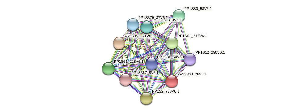 PP1S300_28V6.1 protein (Physcomitrella patens) - STRING interaction network