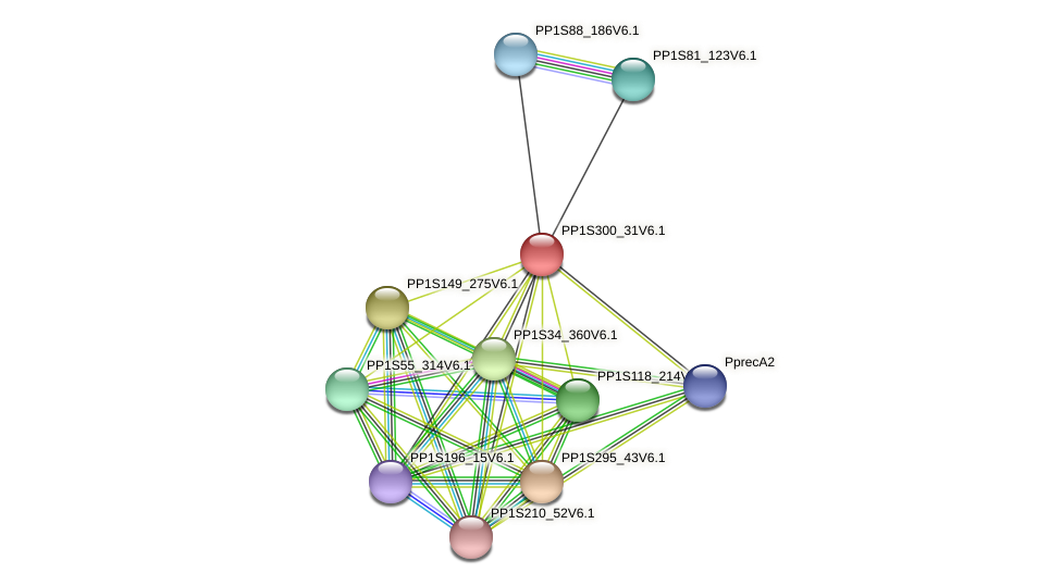 PP1S300_31V6.1 protein (Physcomitrella patens) - STRING interaction network
