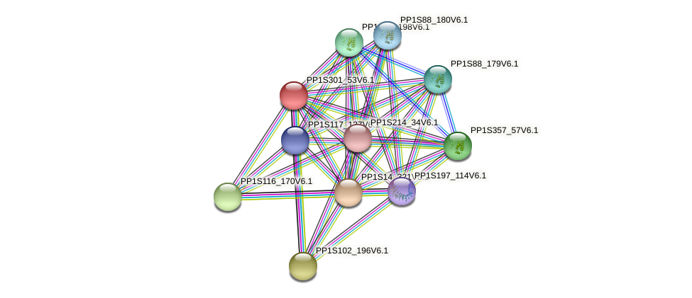 PP1S301_53V6.1 protein (Physcomitrella patens) - STRING interaction network