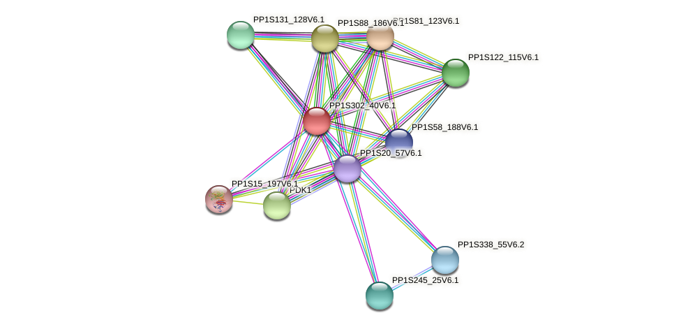 PP1S302_40V6.1 protein (Physcomitrella patens) - STRING interaction network