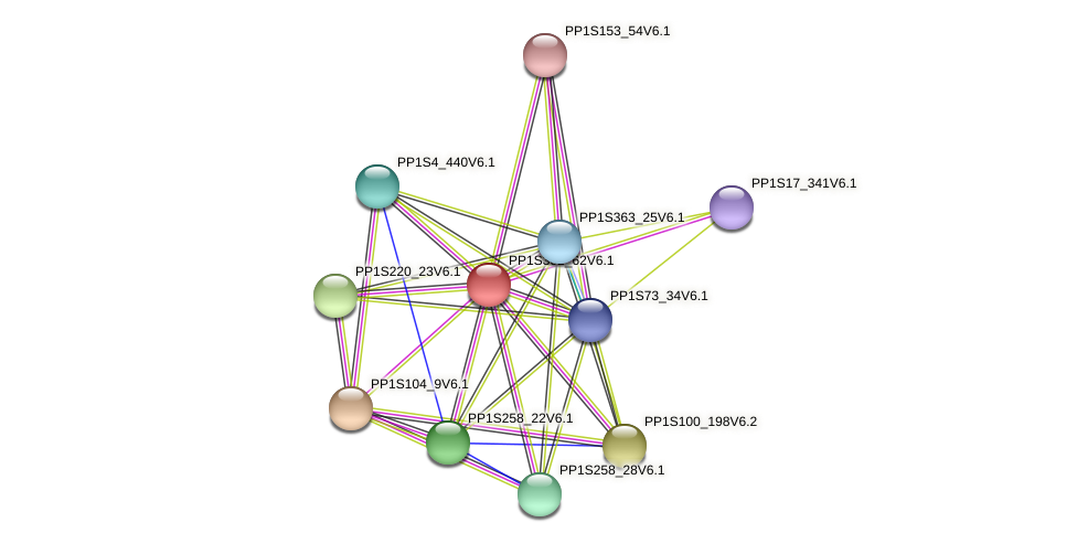 PP1S302_62V6.1 protein (Physcomitrella patens) - STRING interaction network