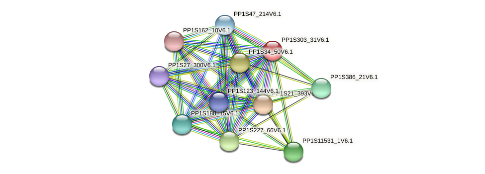 PP1S303_31V6.1 protein (Physcomitrella patens) - STRING interaction network