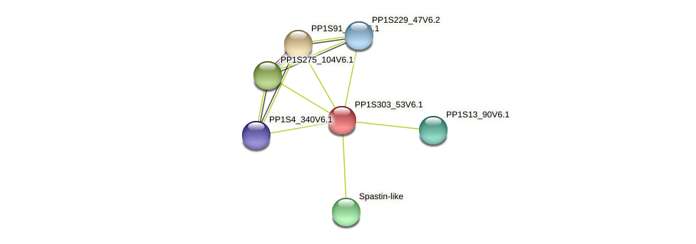 PP1S303_53V6.1 protein (Physcomitrella patens) - STRING interaction network