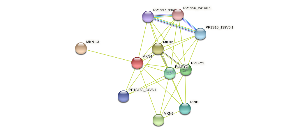 MKN4 protein (Physcomitrella patens) - STRING interaction network