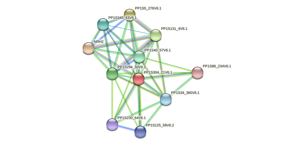 PP1S304_21V6.1 protein (Physcomitrella patens) - STRING interaction network