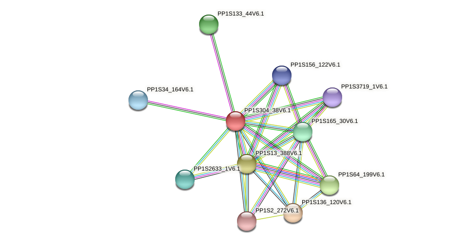 PP1S304_38V6.1 protein (Physcomitrella patens) - STRING interaction network