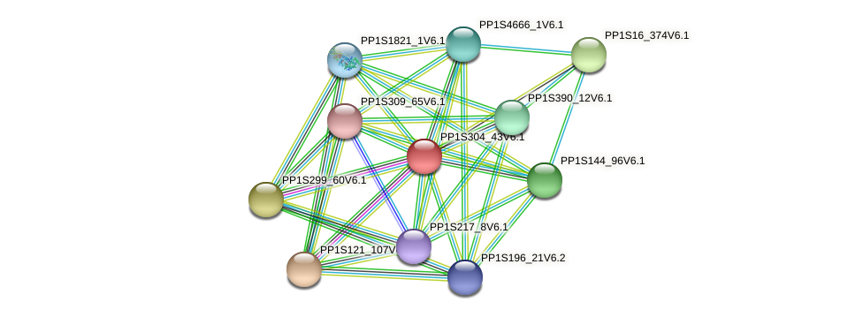 PP1S304_43V6.1 protein (Physcomitrella patens) - STRING interaction network