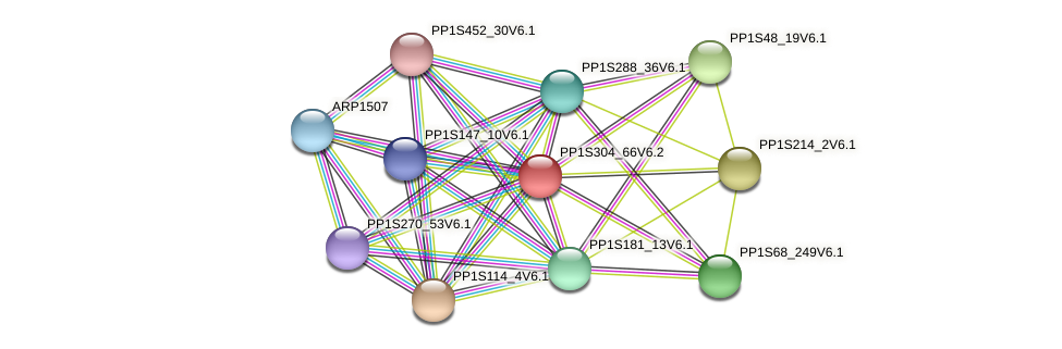 PP1S304_66V6.2 protein (Physcomitrella patens) - STRING interaction network