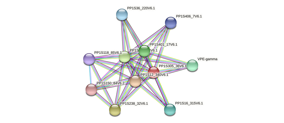PP1S305_36V6.1 protein (Physcomitrella patens) - STRING interaction network