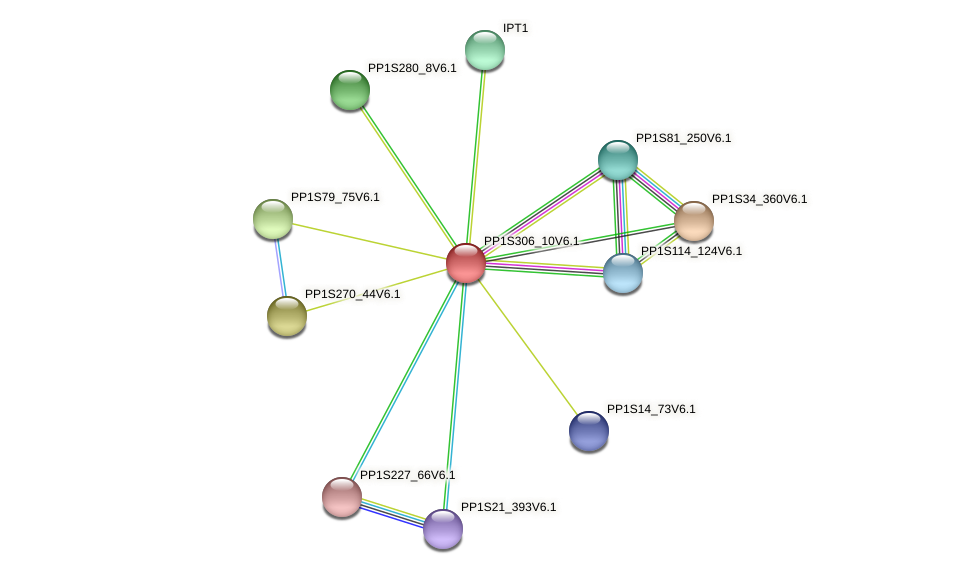 PP1S306_10V6.1 protein (Physcomitrella patens) - STRING interaction network