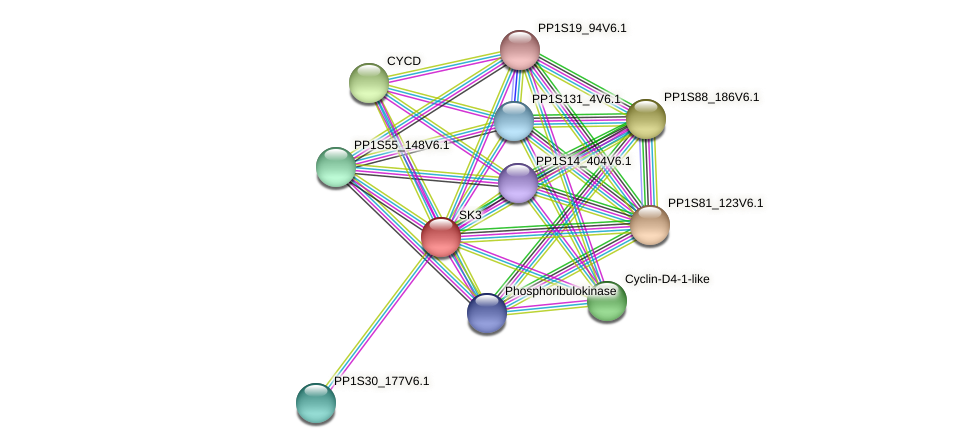 PP1S306_43V6.1 protein (Physcomitrella patens) - STRING interaction network