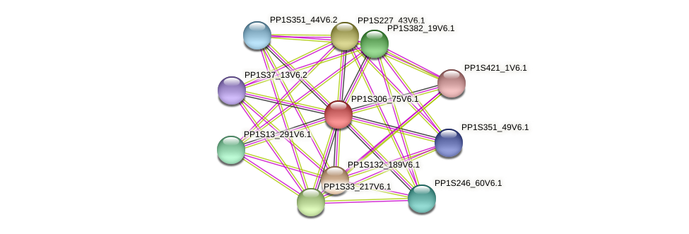 PP1S306_75V6.1 protein (Physcomitrella patens) - STRING interaction network