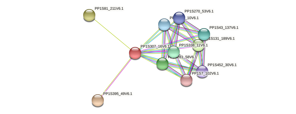 PP1S307_16V6.1 protein (Physcomitrella patens) - STRING interaction network