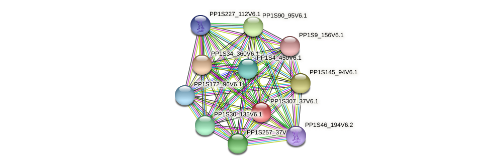 PP1S307_37V6.1 protein (Physcomitrella patens) - STRING interaction network