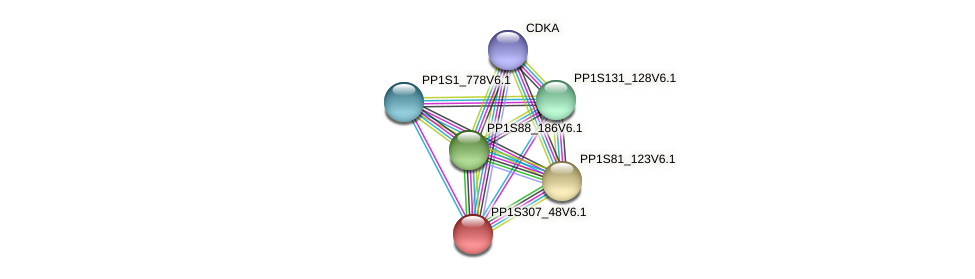 PP1S307_48V6.1 protein (Physcomitrella patens) - STRING interaction network