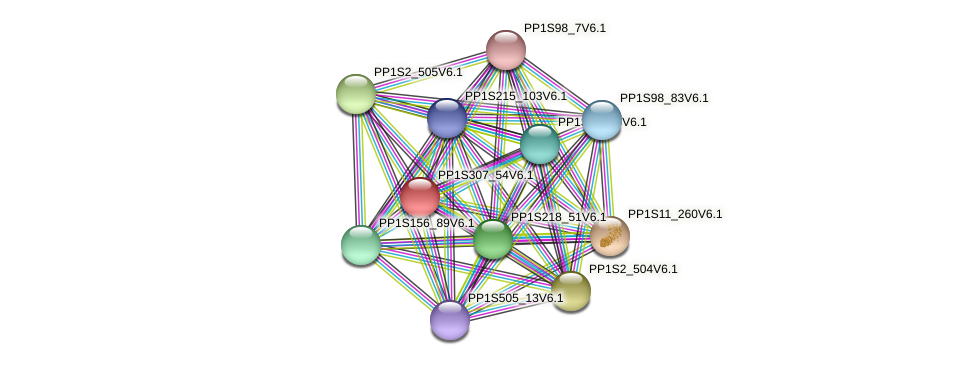 PP1S307_54V6.1 protein (Physcomitrella patens) - STRING interaction network