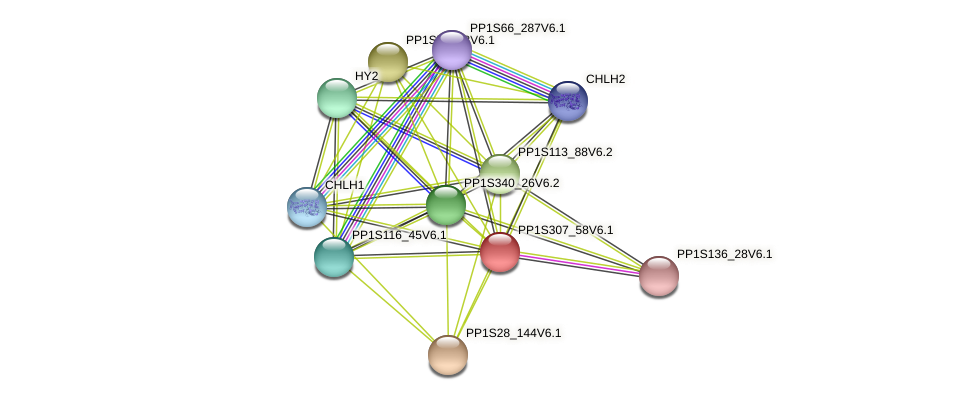 PP1S307_58V6.1 protein (Physcomitrella patens) - STRING interaction network