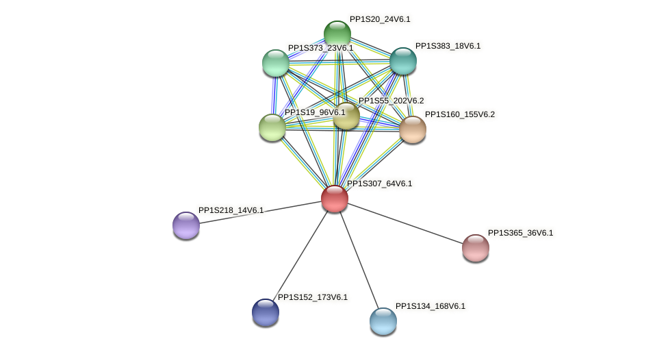 PP1S307_64V6.1 protein (Physcomitrella patens) - STRING interaction network