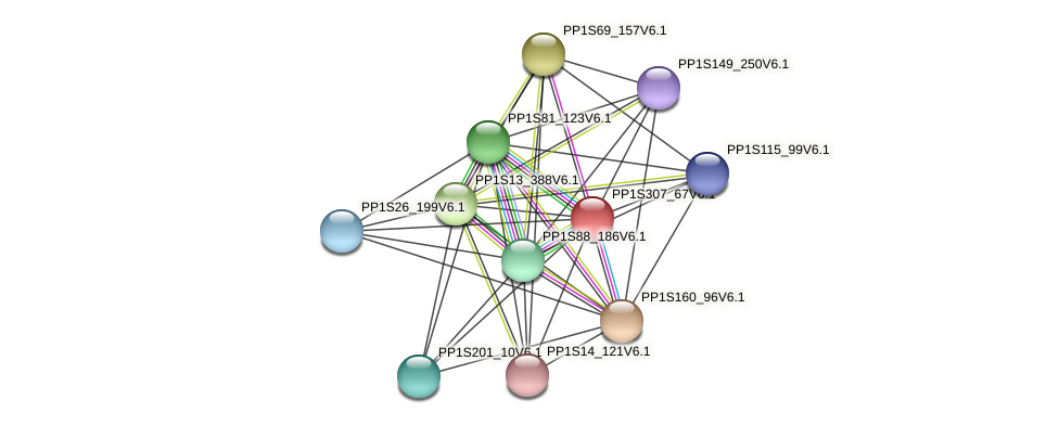 PP1S307_67V6.1 protein (Physcomitrella patens) - STRING interaction network